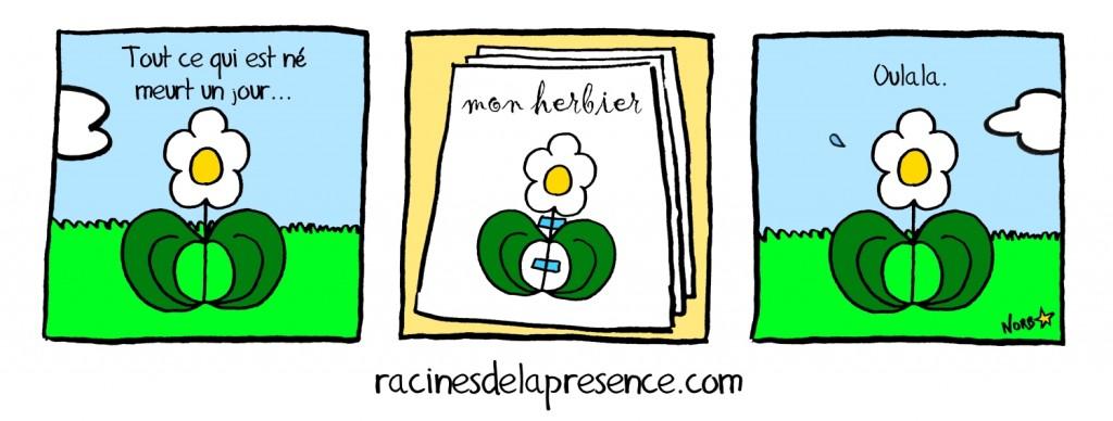 racinesdelapresence03